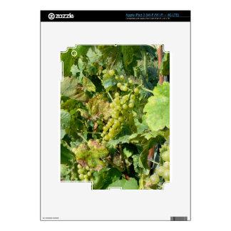 White grapes in a vineyard iPad 3 skin