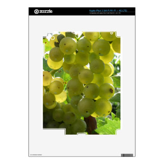 White grapes in a vineyard iPad 3 skins