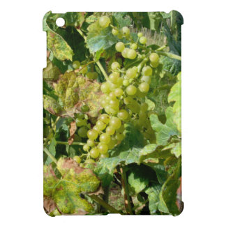 White grapes in a vineyard iPad mini case