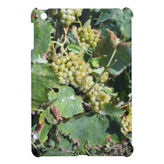 White grapes in a vineyard iPad mini covers