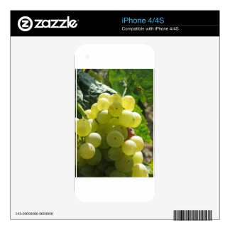 White grapes in a vineyard iPhone 4 decal