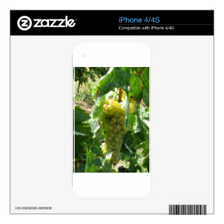 White grapes in a vineyard iPhone 4 skins