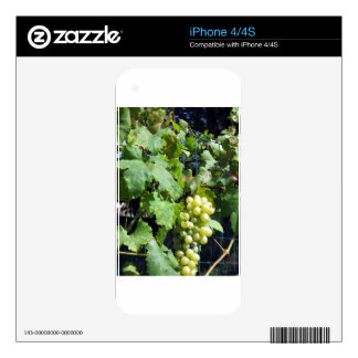 White grapes in a vineyard iPhone 4S skins