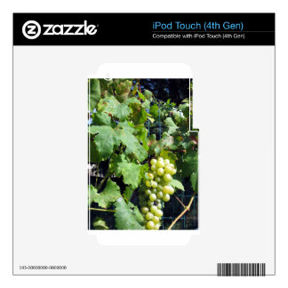 White grapes in a vineyard iPod touch 4G decals