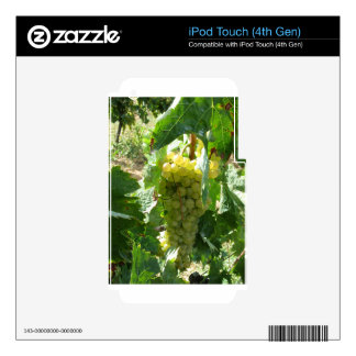 White grapes in a vineyard iPod touch 4G skin
