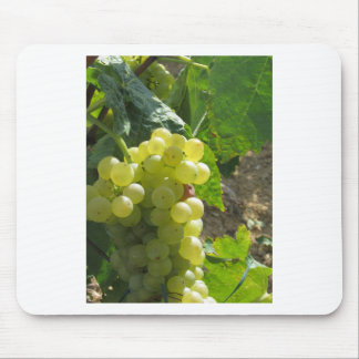 White grapes in a vineyard mouse pad