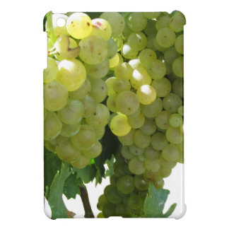White grapes in a vineyard on white background cover for the iPad mini