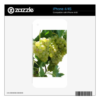 White grapes in a vineyard on white background decals for iPhone 4S