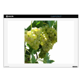 "White grapes in a vineyard on white background 17"" laptop skins"