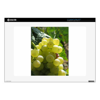 "White grapes in a vineyard decals for 15"" laptops"