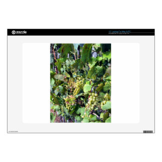 "White grapes in a vineyard 15"" laptop skins"