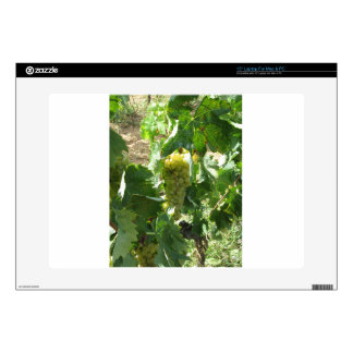 White grapes in a vineyard decals for laptops