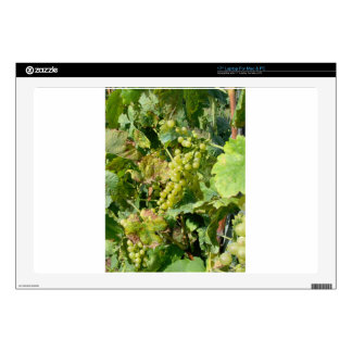 "White grapes in a vineyard 17"" laptop decal"