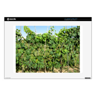 White grapes in a vineyard laptop decals
