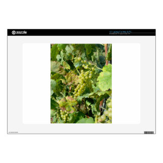 White grapes in a vineyard skins for laptops