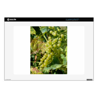 White grapes in a vineyard decal for laptop