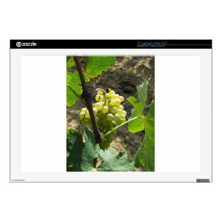 "White grapes in a vineyard skin for 17"" laptop"