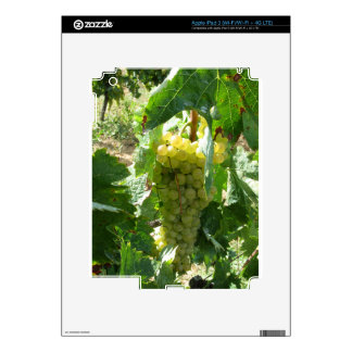 White grapes in a vineyard skin for iPad 3