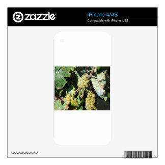 White grapes in a vineyard skin for iPhone 4S