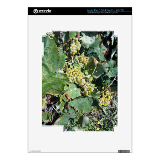 White grapes in a vineyard skins for iPad 3