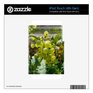 White grapes in a vineyard skins for iPod touch 4G