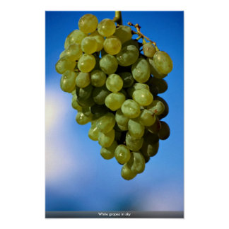 White grapes in sky poster