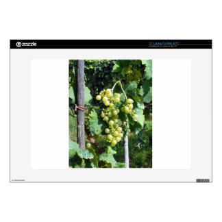 "White Grapes on the Vine 15"" Laptop Skin"