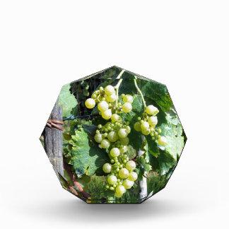 White Grapes on the Vine Acrylic Award