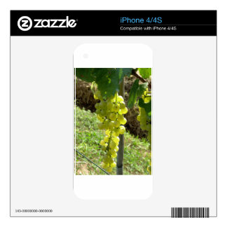 White Grapes on the Vine Decal For iPhone 4