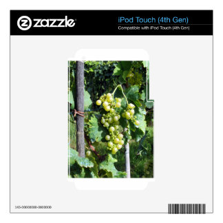 White Grapes on the Vine Decal For iPod Touch 4G