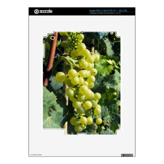 White Grapes on the Vine Decals For iPad 3