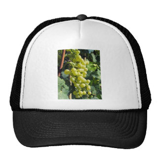 White Grapes on the Vine Hat