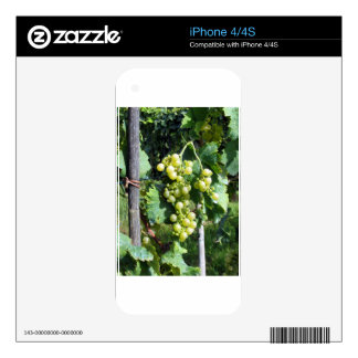 White Grapes on the Vine iPhone 4S Skin
