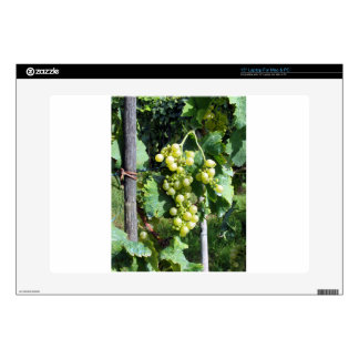 "White Grapes on the Vine 15"" Laptop Skin"