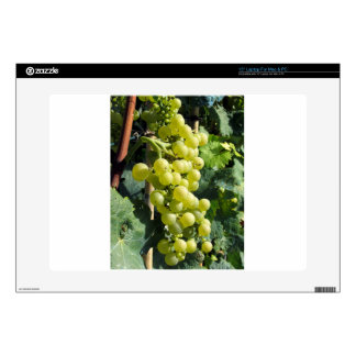 "White Grapes on the Vine 15"" Laptop Decals"