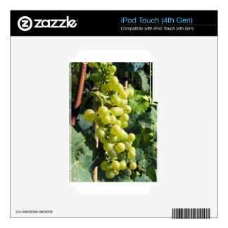 White Grapes on the Vine Skin For iPod Touch 4G