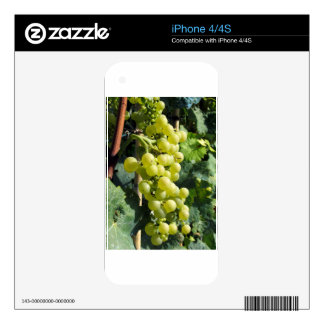 White Grapes on the Vine Skins For iPhone 4