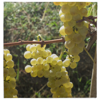 White grapes on the vine . Tuscany, Italy Cloth Napkin