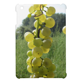 White grapes on the vine . Tuscany, Italy iPad Mini Cases