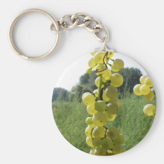 White grapes on the vine . Tuscany, Italy Keychain