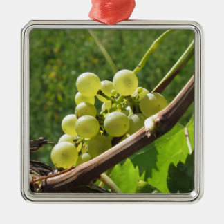 White grapes on the vine . Tuscany, Italy Metal Ornament