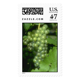 White Grapes Stamp