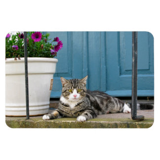 White Gray Tiger Cat on Front Porch Blue Door Magnet
