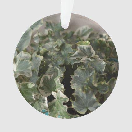 white green ivy pretty plant design