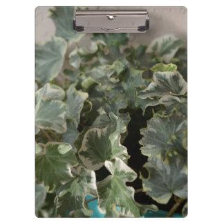 white green ivy pretty plant design clipboard