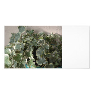 white green ivy pretty plant design photo card template