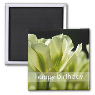 White & Green Variegated Tulips DSC0856 2 Inch Square Magnet