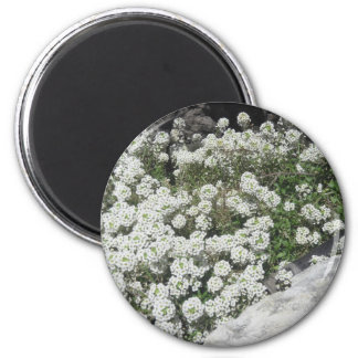 White Ground Cover Magnet
