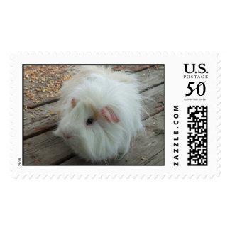 White Guinea Pig Stamp