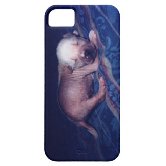 White Hairless Chinese Crested Newborn Puppy iPhone SE/5/5s Case